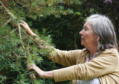 Call of the Forest: The Forgotten Wisdom of Trees – 3:40 pm UNS 52 min.