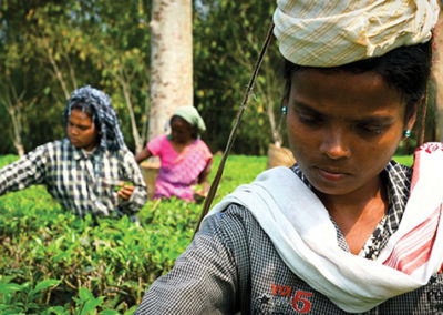 Fertile Ground: Brewing Change in Northwest India – 11:30 am UNS 5 min.